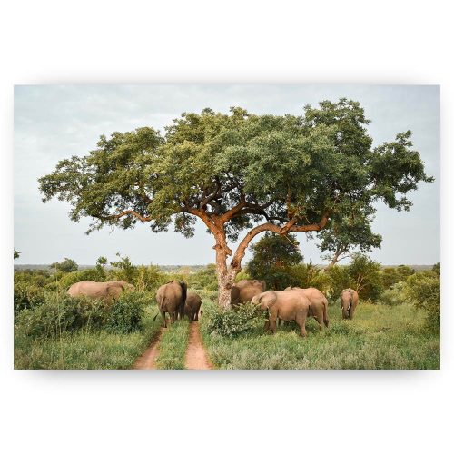 kudd olifanten onder boom