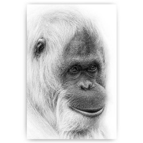 orang oetan portret wit