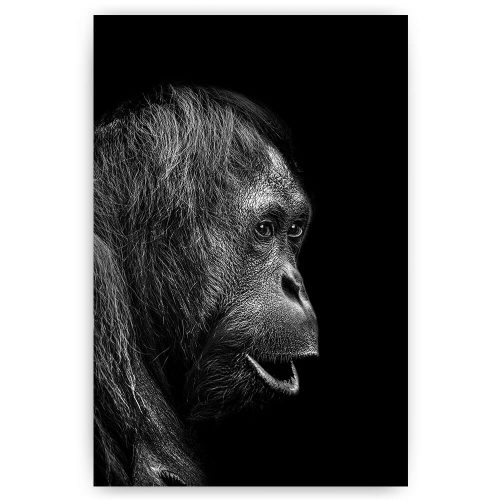 orang oetan portret aap