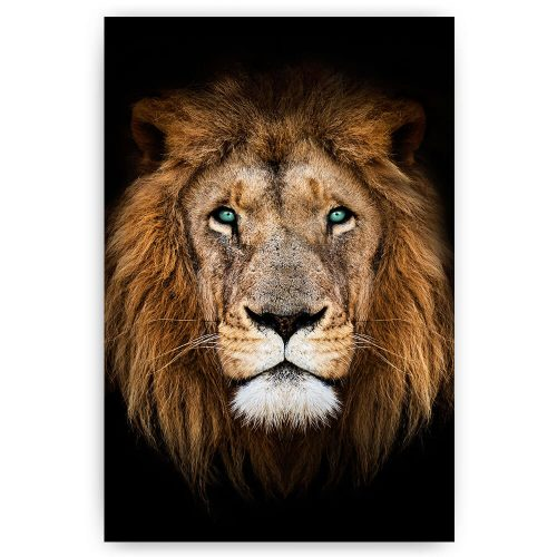 portret leeuw met blauwe ogen