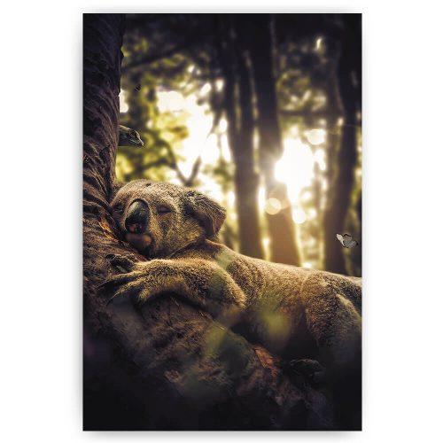 Slapende koala in boom