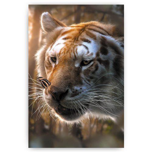 tijger met vlinder op neus