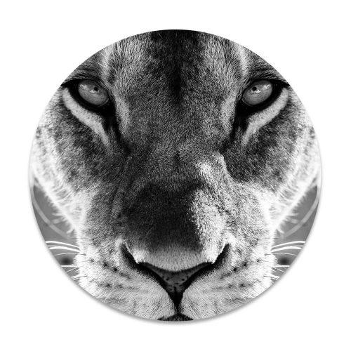 Rond schilderij kop leeuwin