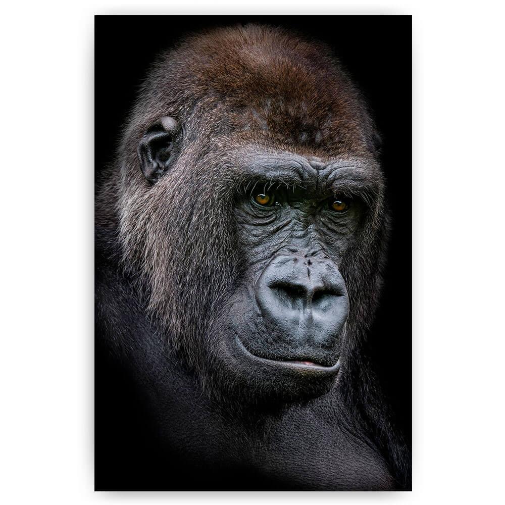 gorilla man portret