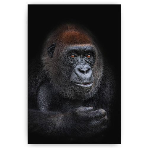 gorila vrouw portret