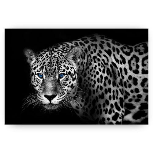 jaguar blauwe ogen