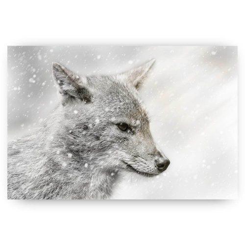 jakhals in de sneeuw