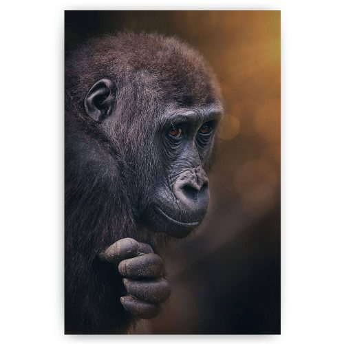 jonge gorilla aap