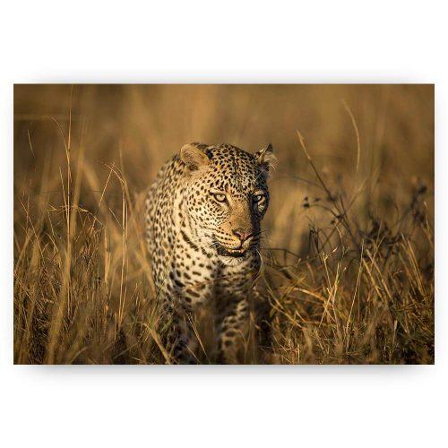luipaard in gras