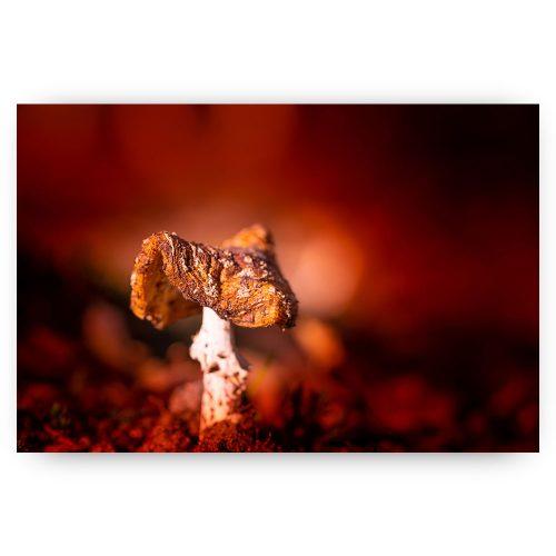 paddenstoel herfst