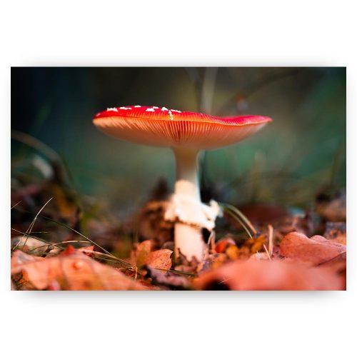 paddenstoel rood wit