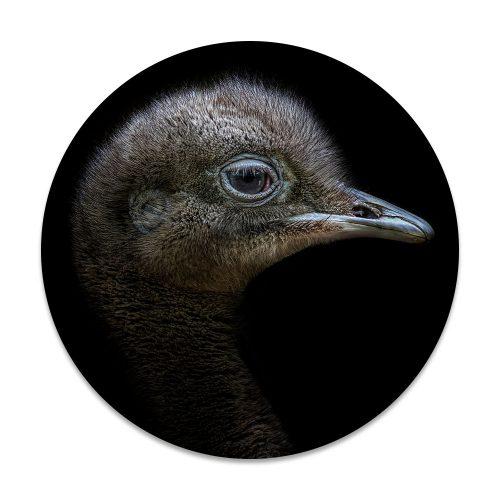 emoe vogel