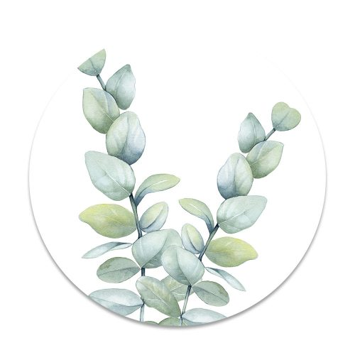 eucalyptus blad