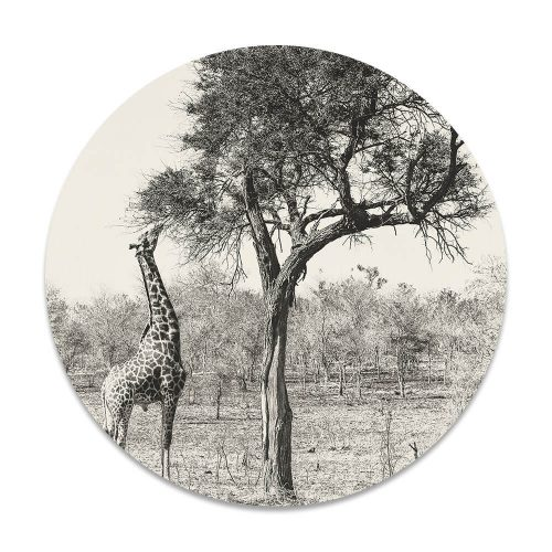 giraffe boom
