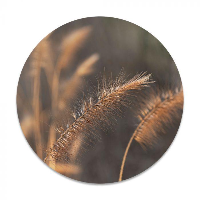 graan gras