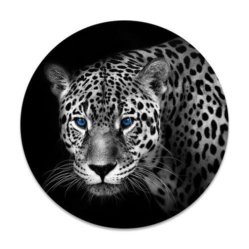 luipaard blauwe ogen