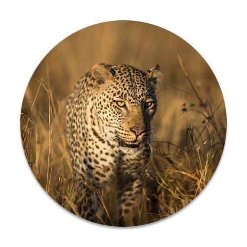 luipaard hoog gras