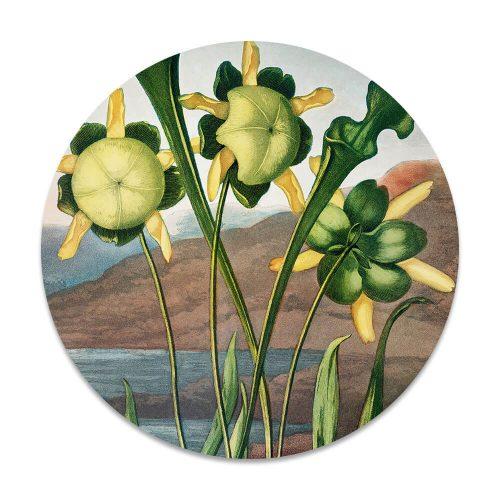 klassieke bloemen