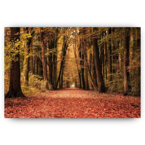 herfstwandeling bos