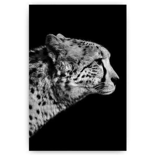 jachtluipaard zwart wit