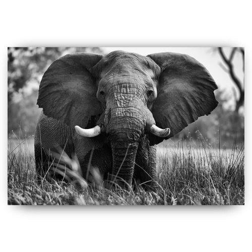 olifant in grasland