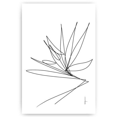 paradijsvogel lijntekening