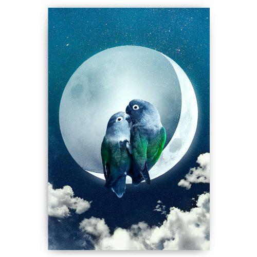 vogels in de nacht