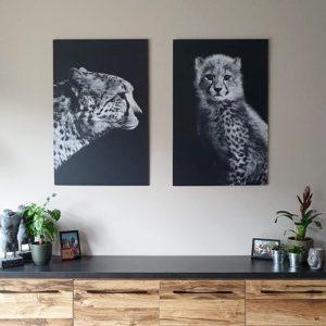 cheetah set