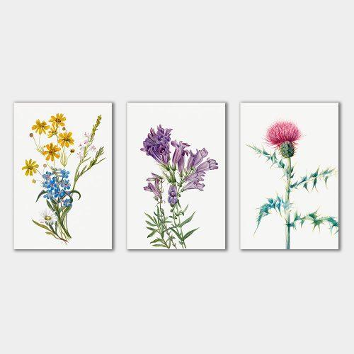 set wildflower