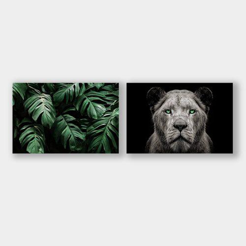 jungle leeuwin